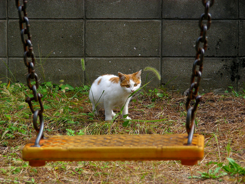 ブランコの向こう側のシロ茶猫3