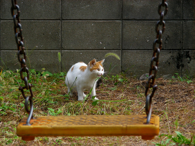 ブランコの向こう側のシロ茶猫4