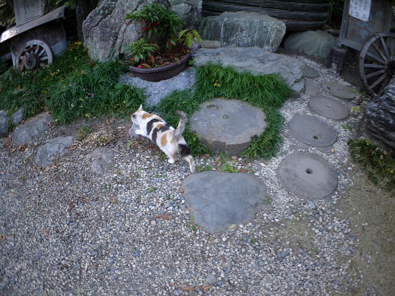 境内を歩く薄い柄の三毛猫1