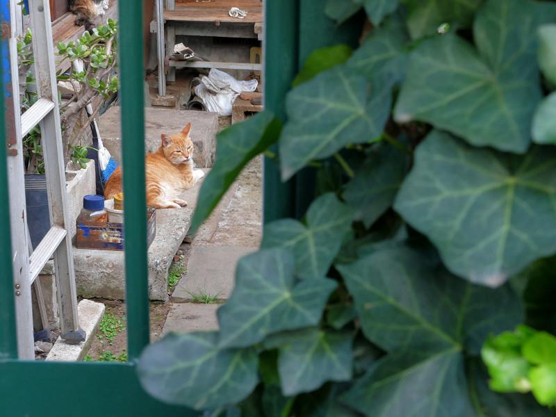 小さな庭の猫たち1