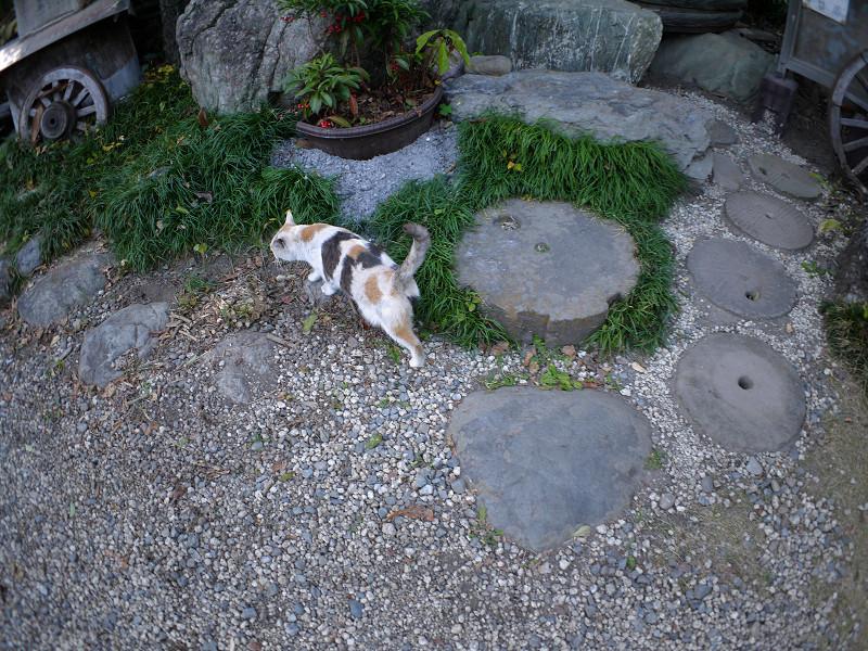 境内を歩く薄い柄の三毛猫2