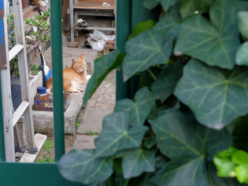 小さな庭の猫たち2