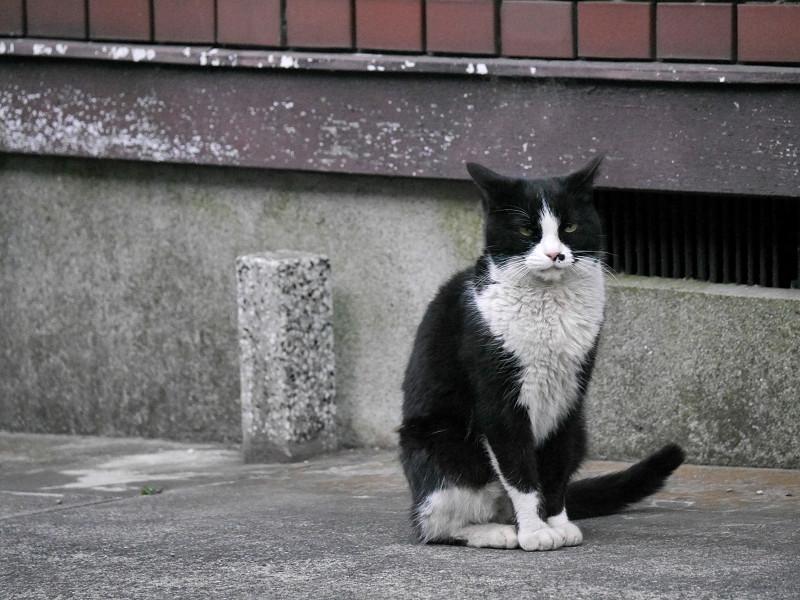 顔だけを動かす黒白猫2