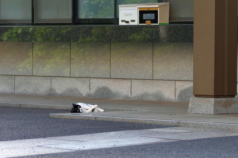 転がっていた黒白猫3