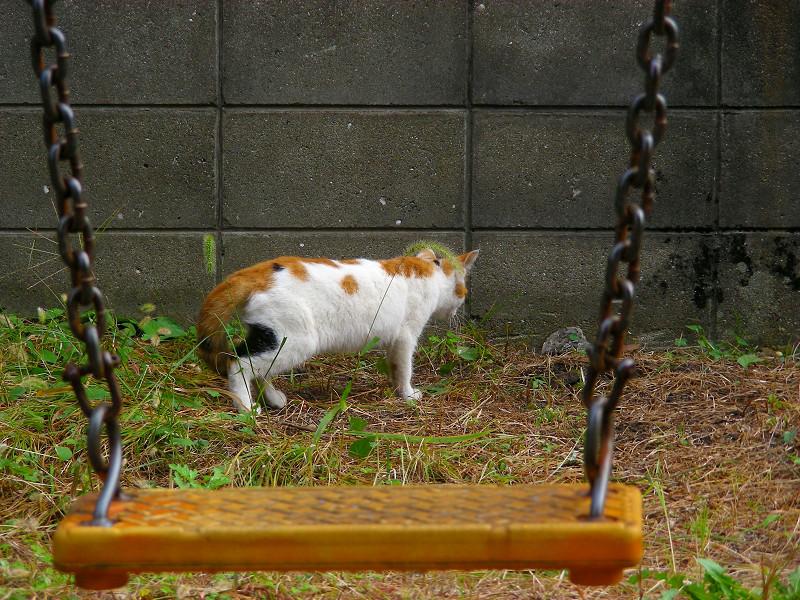 ブランコから離れた白茶猫1