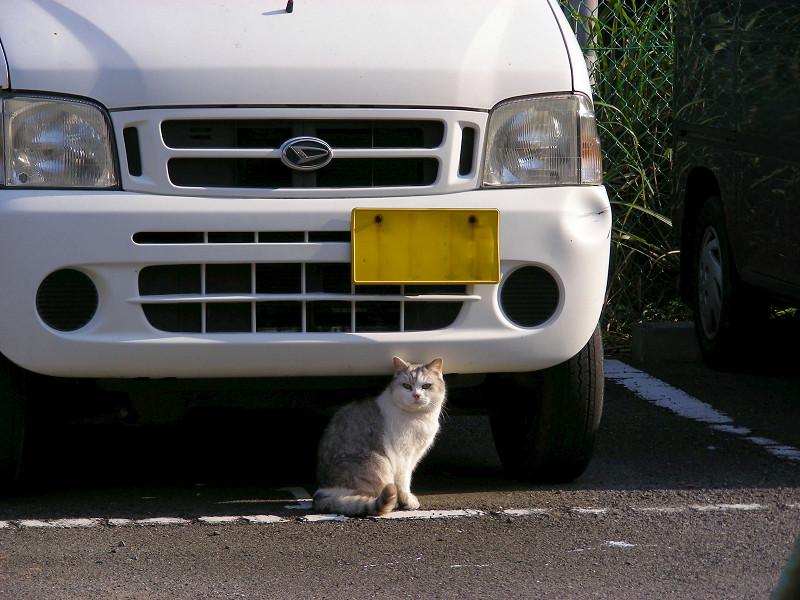 駐車場の毛長の猫1