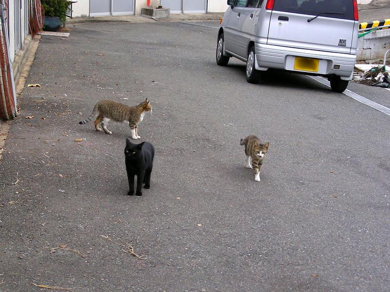 軽自動車と猫たち1