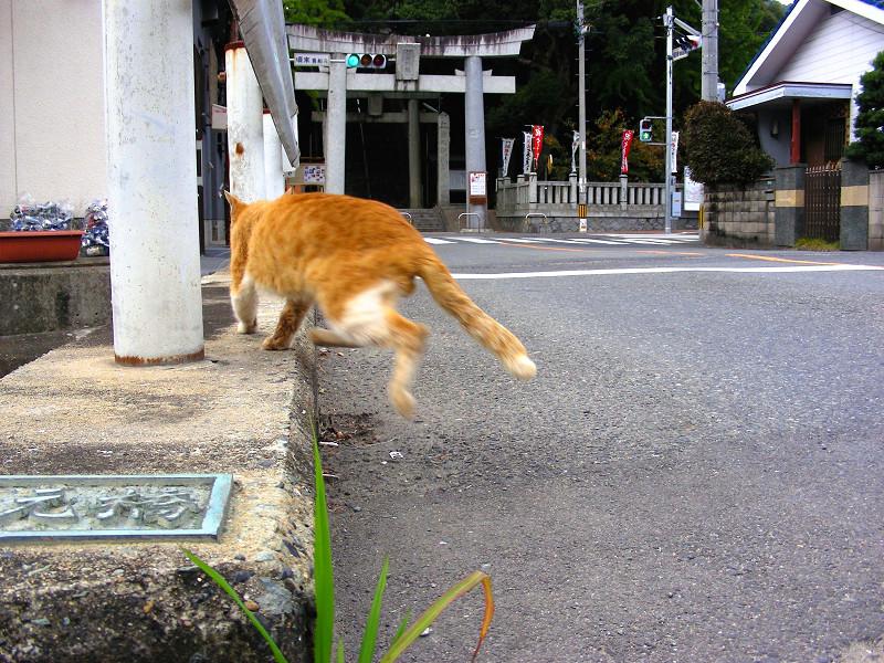 橋の茶白猫1