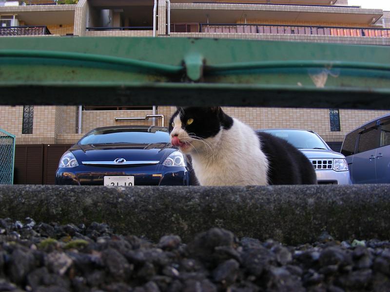 金網隙間と黒白猫1