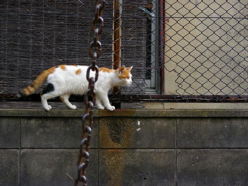 ブランコから離れた白茶猫2