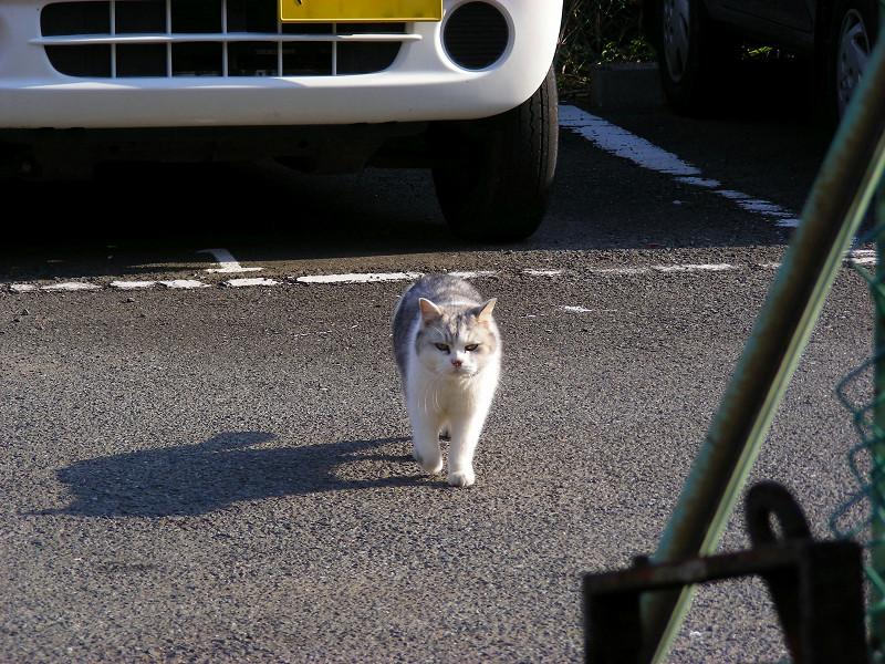 駐車場の毛長の猫2