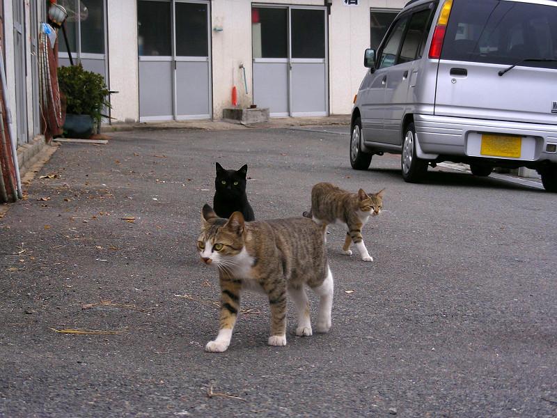 軽自動車と猫たち2
