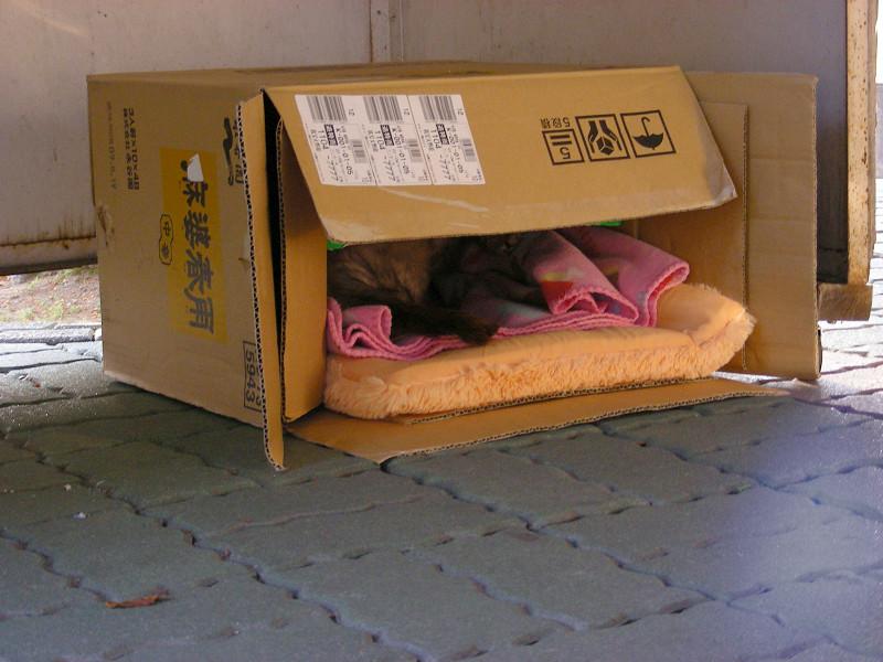 段ボール猫ハウス2