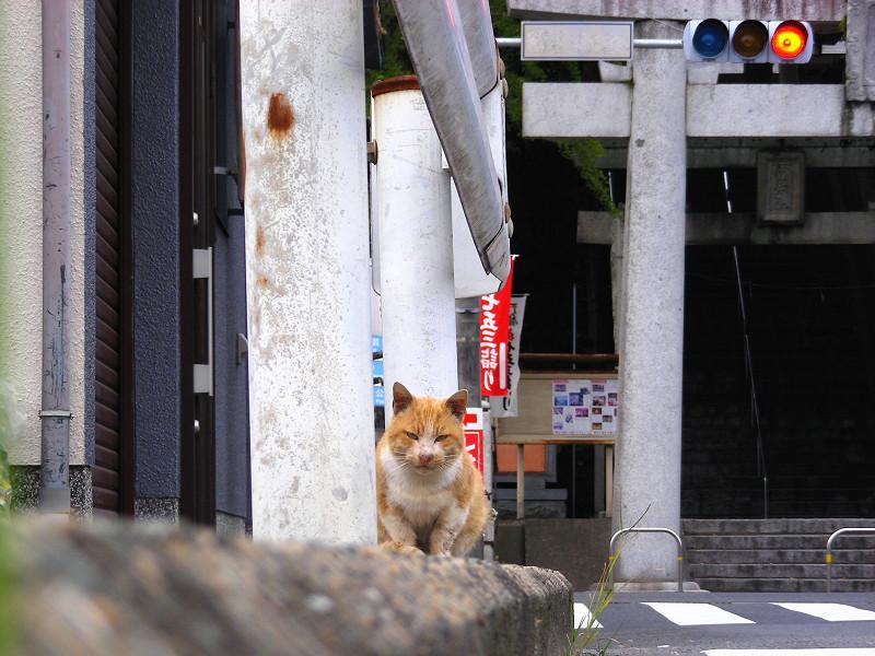 橋の茶白猫2