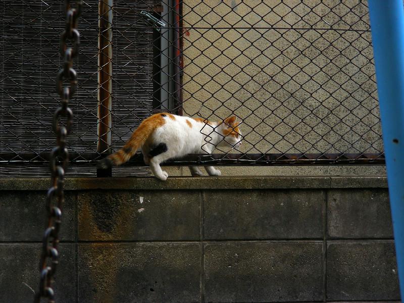 ブランコから離れた白茶猫3