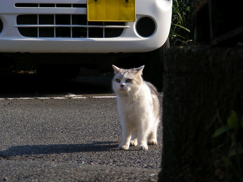 駐車場の毛長の猫3