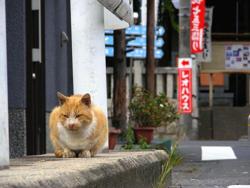 橋の茶白猫3