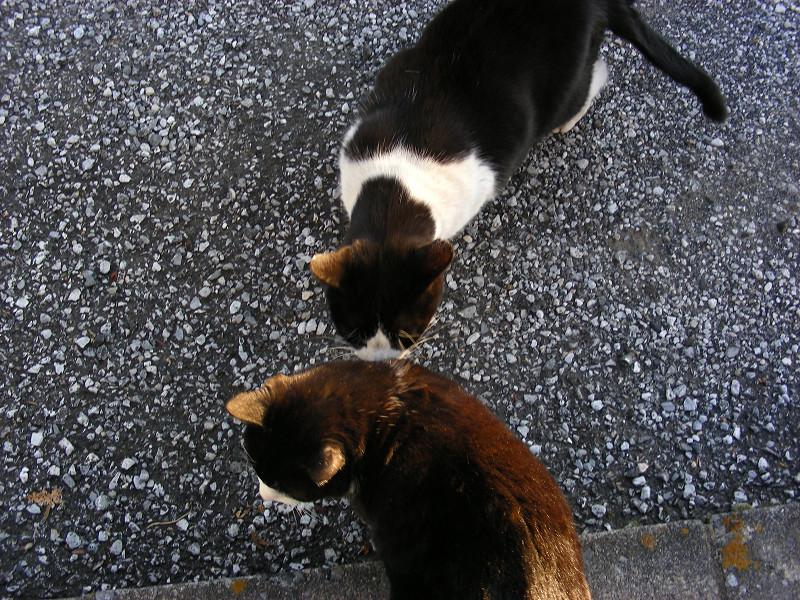 金網隙間と黒白猫3