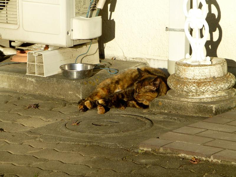 夕陽を受けて寝ているサビ柄猫1