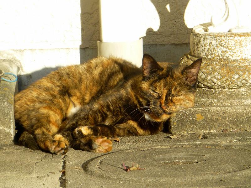 夕陽を受けて寝ているサビ柄猫2