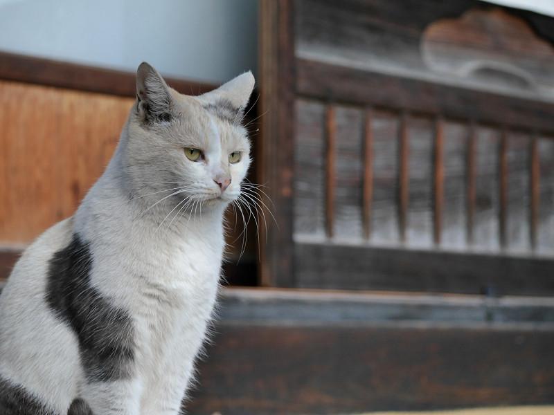 縁側で見ている薄い柄の三毛猫2