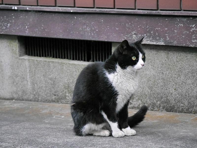 ゆっくりと動く黒白猫3