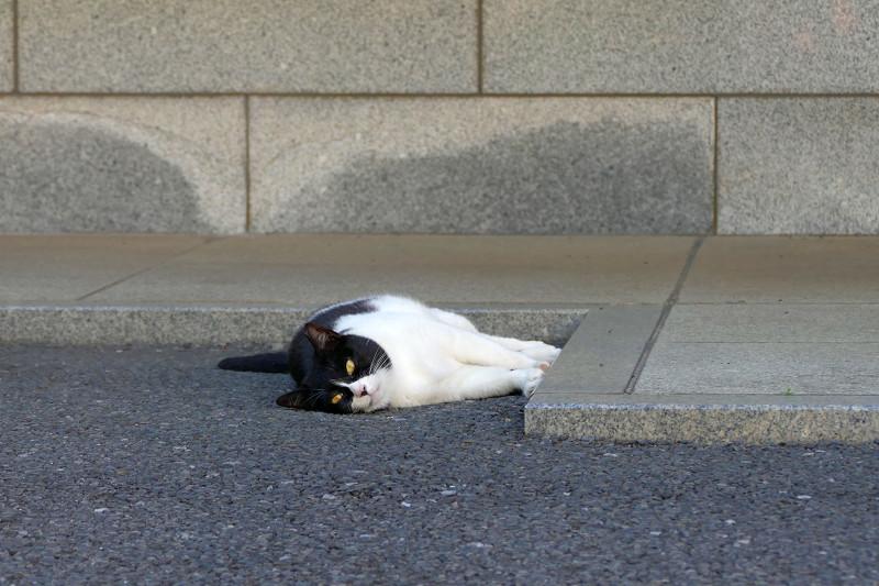 縁に手足をくっつけてる黒白猫1