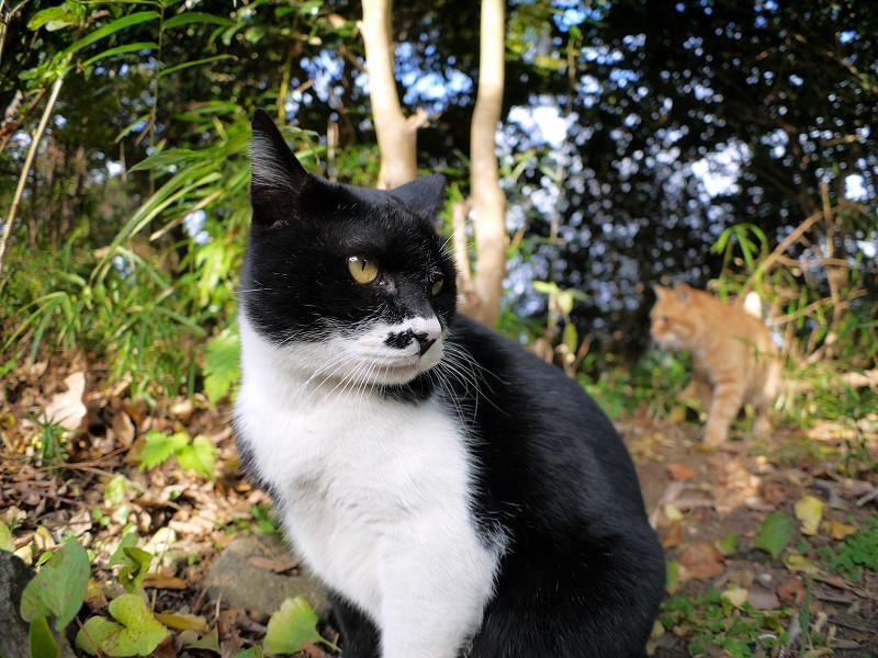 横向きの黒白猫2