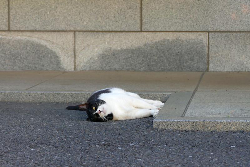 縁に手足をくっつけてる黒白猫3