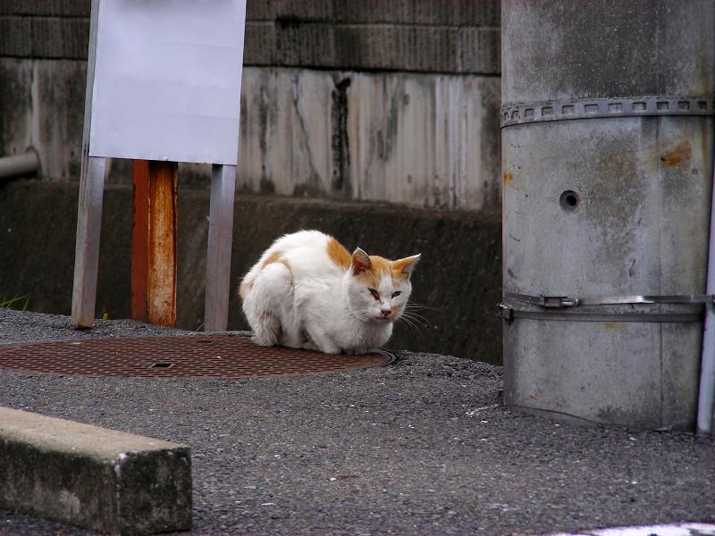 川の横の白茶猫1