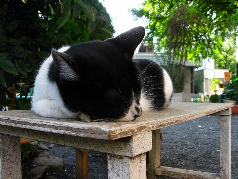 木のベンチで寝ている白黒猫1