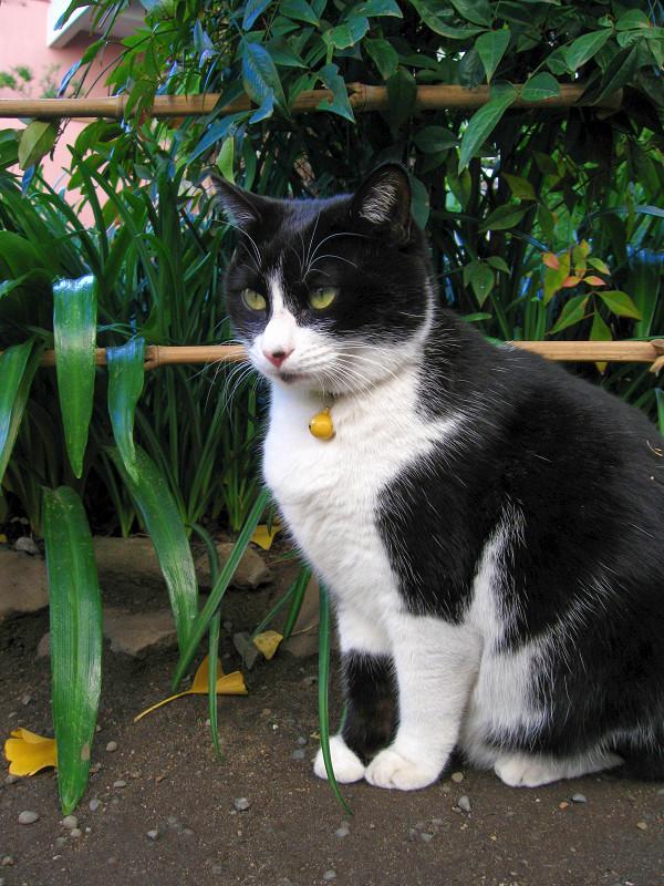 地面に座ってる黒白猫1