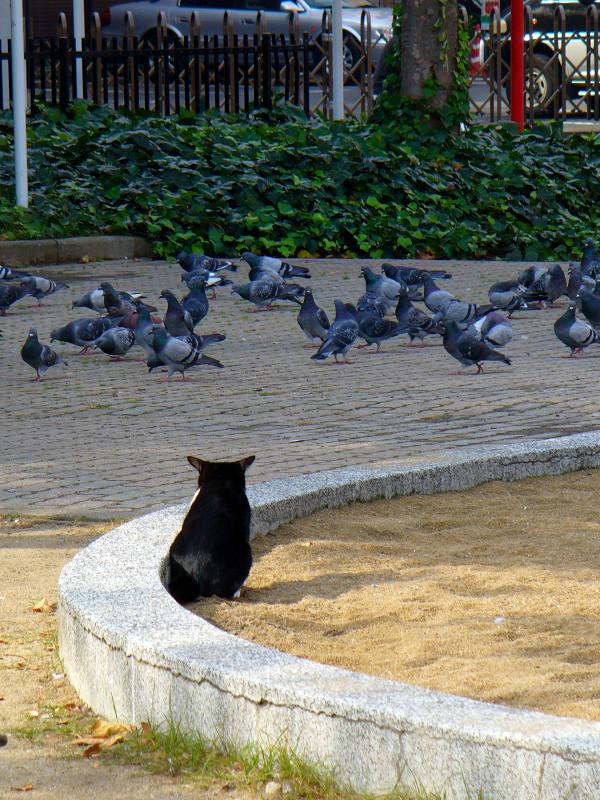 公園砂場の黒白猫1