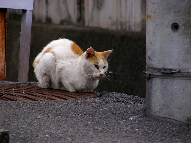 川の横の白茶猫2