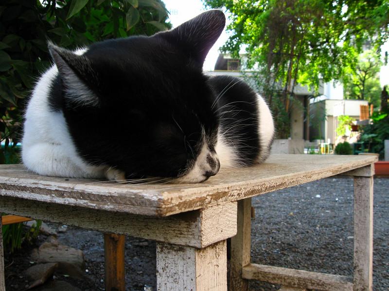 木のベンチで寝ている白黒猫2