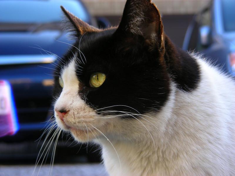 駐車場と黒白猫3