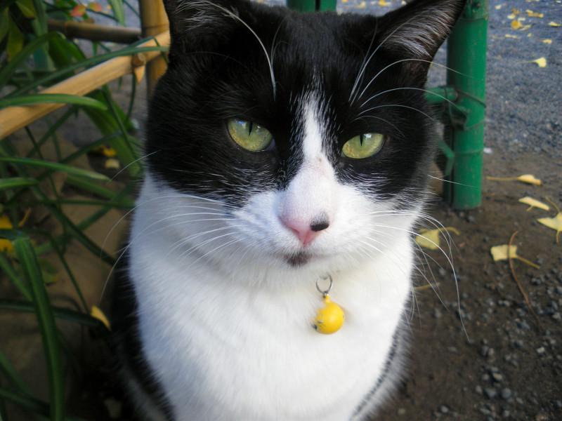 地面に座ってる黒白猫3