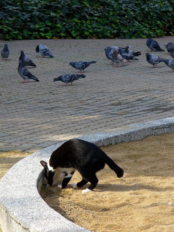 公園砂場の黒白猫3