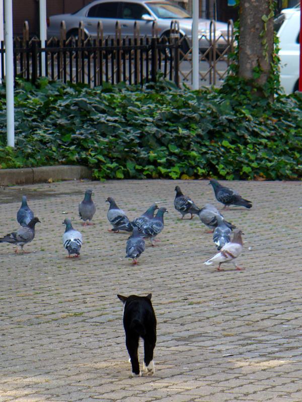 公園砂場の黒白猫4