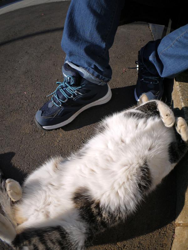 足元で遊ぶキジ白猫1
