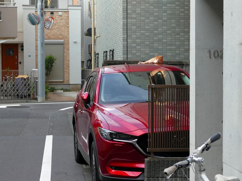 赤い車と茶白猫1