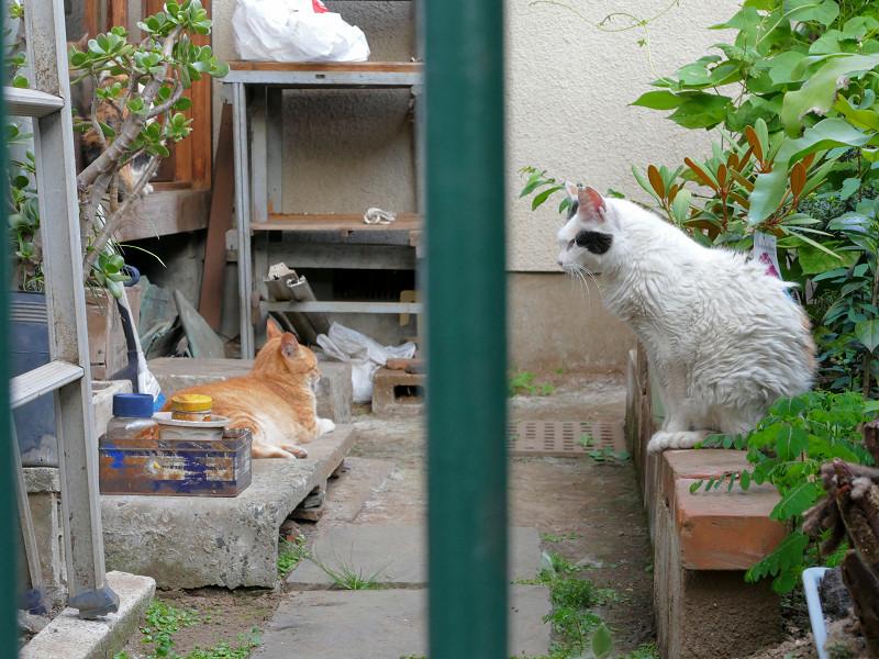 不愉快感の猫たち1