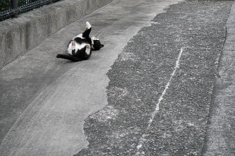 駐車場でゴロゴロ転がる黒白猫1