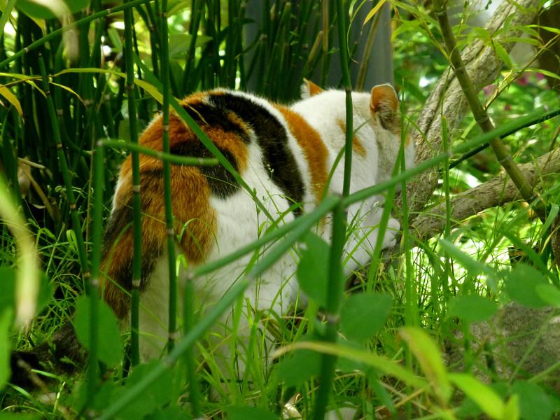 草むらの白三毛猫2