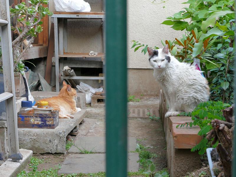 不愉快感の猫たち2