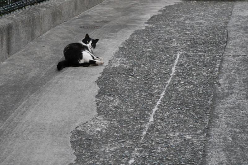 駐車場でゴロゴロ転がる黒白猫2