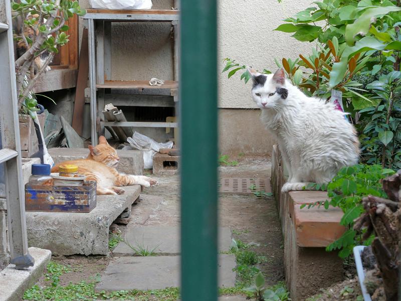 不愉快感の猫たち3