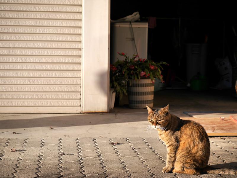 前を横切るサビ柄猫3