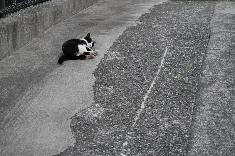 駐車場でゴロゴロ転がる黒白猫3
