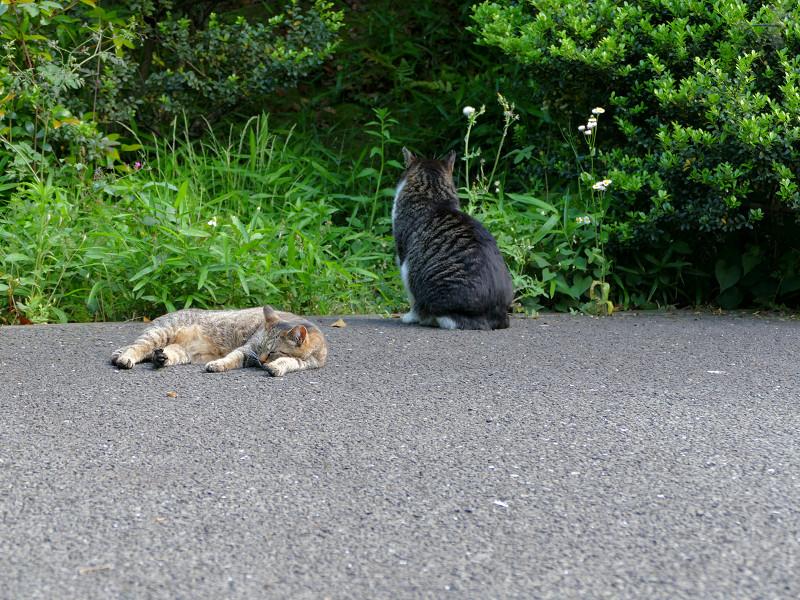 境内の端の猫2匹1